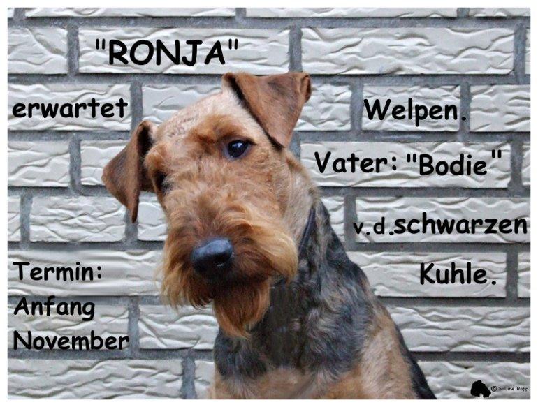Ronjas Wurfankündigung vom 05.10.18