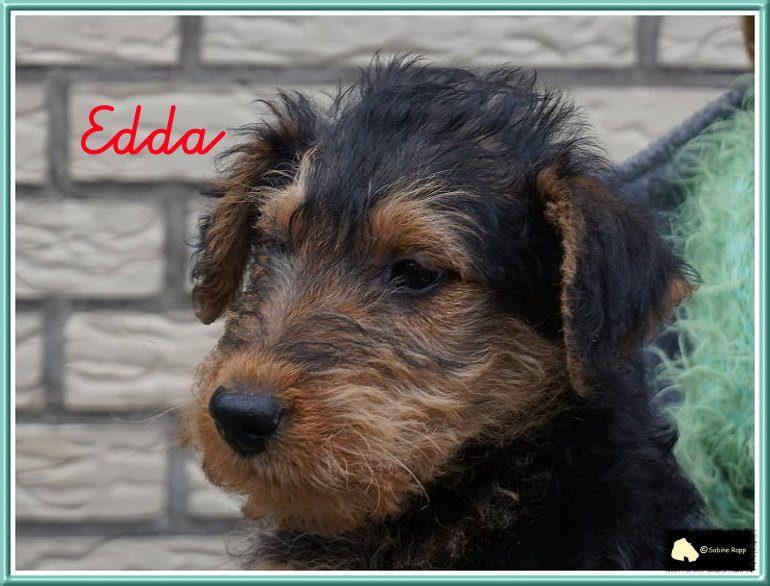 Edda vom St. Laurentius